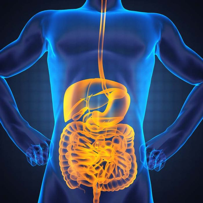 Our gut microbiome, when regulated correctly, helps us with digestion and other processes.
