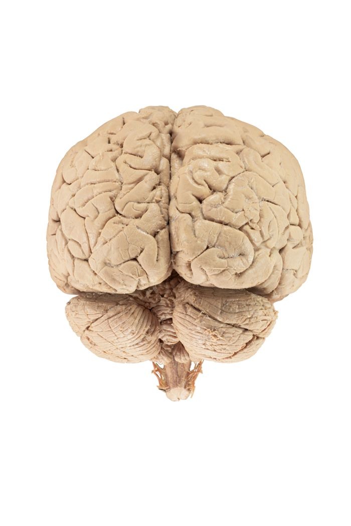 Hormone treatments might cause brain diseases.