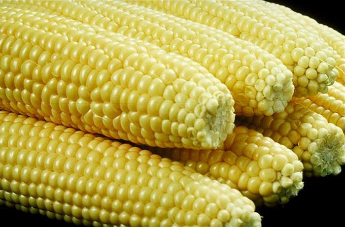 Removing corn residue from the soil can increase greenhouse gas emissions