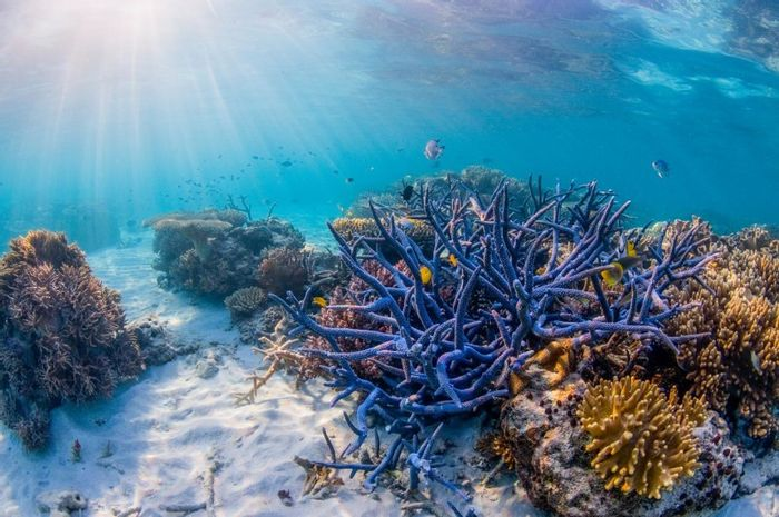 The Great Barrier Reef needs policies based on science, protection and conservation.