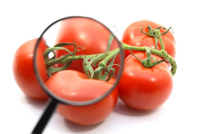 Tomatoes grown on the Virginia Eastern Shore have been attributed to multiple Salmonella outbreaks.
