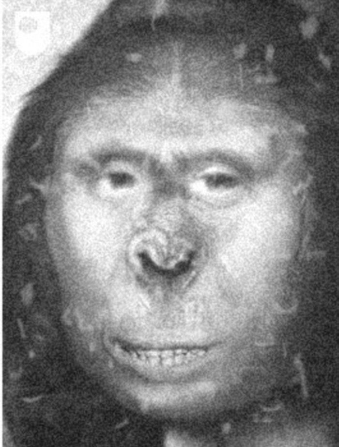 A leading genetecist claims a towering woman named Zana (artist's representation) who lived in 19th Century Russia - and appeared to be 'half human, half ape'