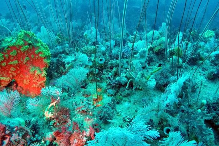 A stunning image captured by an ROV of a new coral reef