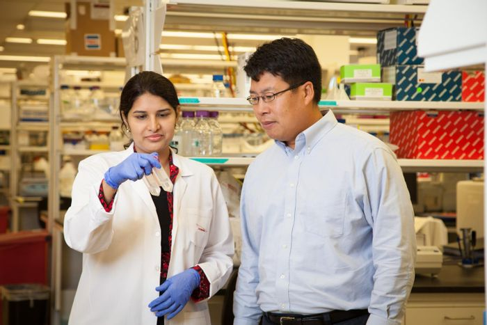 Professor Chin-Yo Lin works with Ph.D. student Sridevi Addanki in his lab at the Center for Nuclear Receptors and Cell Signaling in the College of Natural Sciences and Mathematics at the University of Houston.