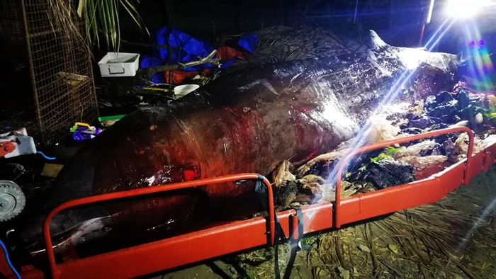 Piles of plastic sit beside a deceased whale following a necropsy.