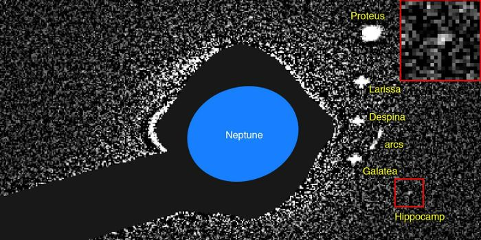 This is what Hippocamp looked like when Mark Showalter observed it with the Hubble Space Telescope in 2013.