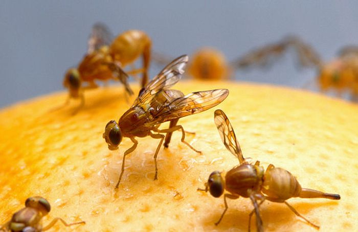 Fruit flies are proving helpful in epilepsy research