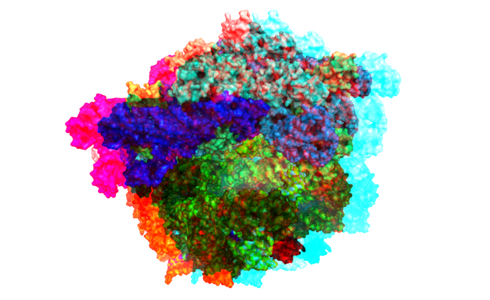 Anaglyph image of the ribosome. / Credit: Jason Vertrees