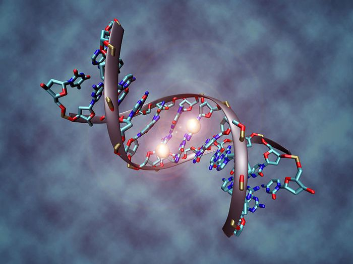 A DNA molecule methylated on both strands on the center cytosine. DNA methylation plays an important role for epigenetic gene regulation in development and cancer. Credit: Christoph Bock, Max Planck Institute for Informatics