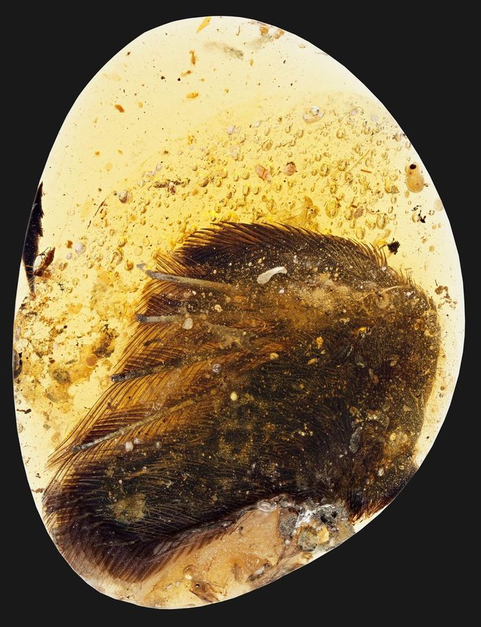 Scientists have found one of the world's most intact bird wing fossils from the Cretaceous period.
