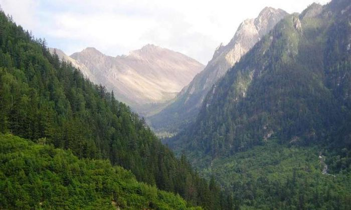 Forestation in China has been confirmed to be regenerating after efforts to reduce deforestation.