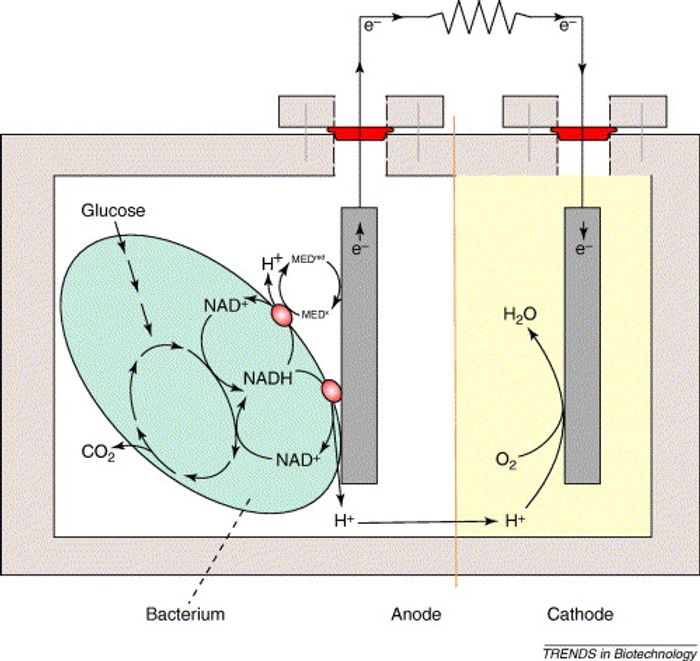 A simple microbial fuel cell - Trends in Biotechnology