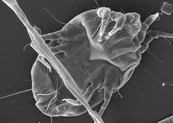 A new technique shows that these sniffle-packing proteins share a combination of stability and abundance, properties that may help researchers spot other likely allergens in the environment. Image credit: Holly Leddy