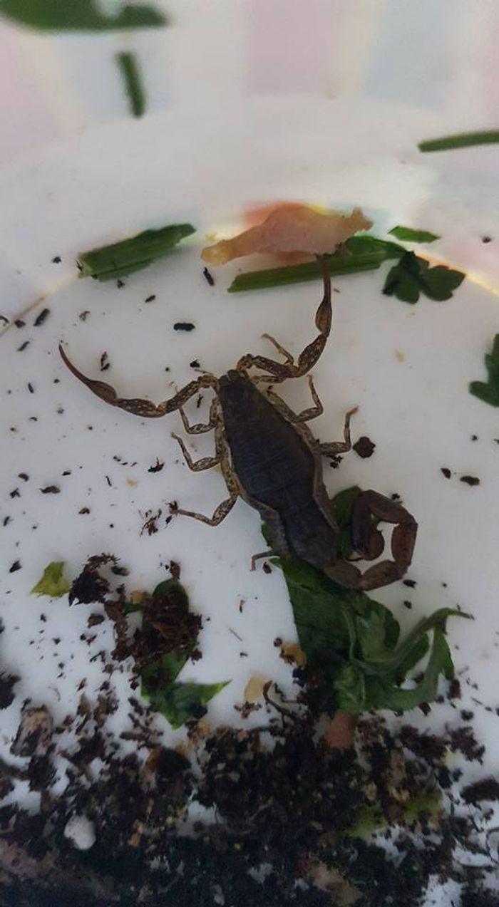 This scorpion was removed from a London train after finding its way out of a passenger's bag.