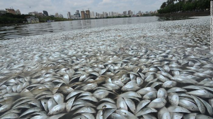 Lake's salinity levels reportedly to blame for 35 tons of dead fish in the water.