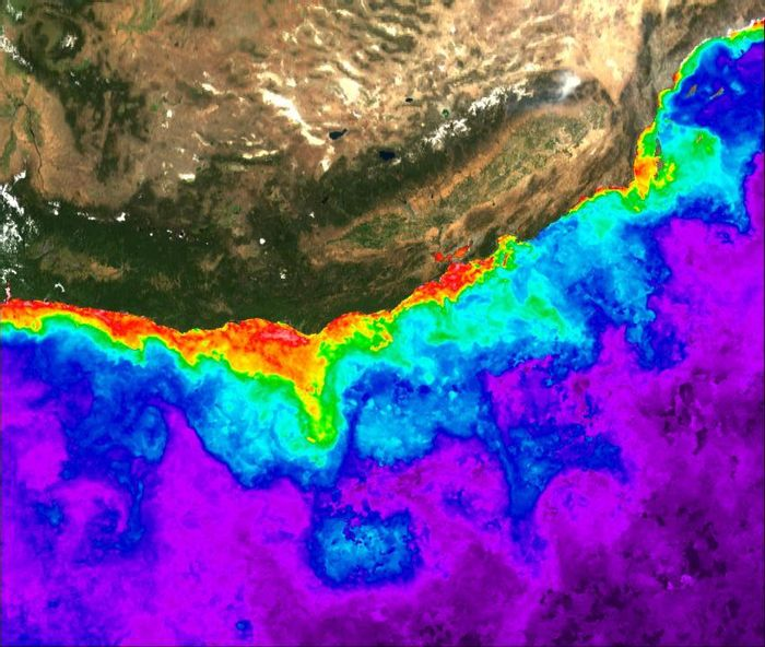 This is the extent of the Pacific Northwest Pseudo-nitzschia bloom in 2015. Gradation of colors purple-blue-green-yellow-red-pink in ocean areas shows increasing chlorophyll concentration towards the coast. Satellite data courtesy of NASA Ocean Biology Processing Group and LAADS-DAAC. / Credit: Mati Kahru, Scripps Institution of Oceanography at UC San Diego.