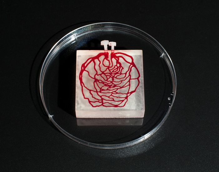 3D-printed tissue-simulating phantom with hemoglobin filled channels - created from an image of human retinal blood vessels. Credit: FDA