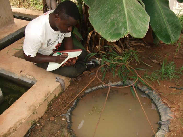 Study co-author Etienne Bilgo observes one of the breeding pools in MosquitoSphere where researchers found that the simple application of a transgenic fungus on a hanging black sheet safely reduced mosquito populations by more than 99%. / Credit: Oliver Zida