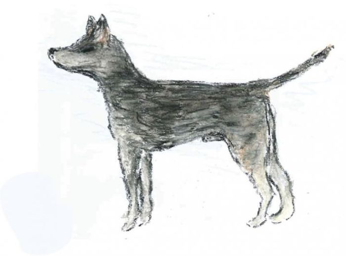 Artist's impression of the 'founder dog' that first gave rise to CTVT. This dog's phenotypic traits were interpreted from the genetic variation found in the DNA of the cancer that it spawned. / Credit: Emma Werner