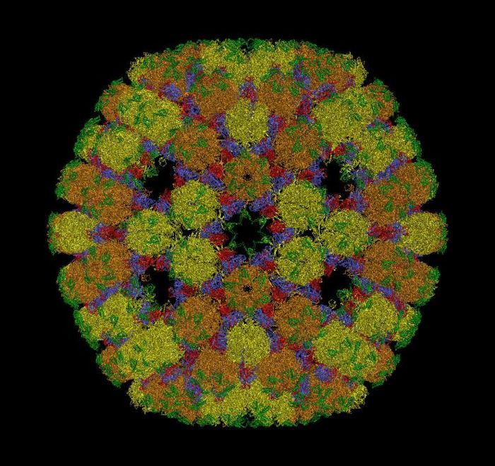 The new mathematical framework changes the way we understand the structure of viruses such as Herpes. / Credit: Prof Reidun Twarock, University of York