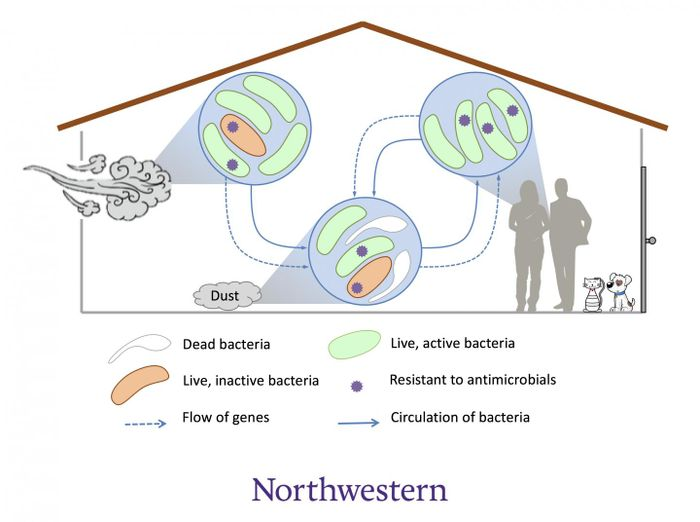 Sometimes, pathogenic bacteria can hitchhike into homes where they meet existing bacteria. /  Credit: Northwestern University