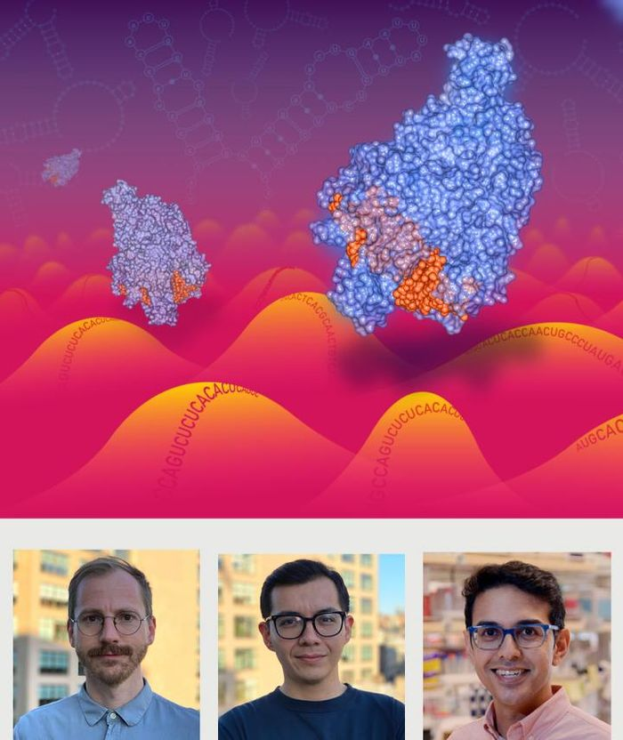 Cas13 enzymes traveling along a RNA landscape. Artist: Christian Stolte; co-first authors, Hans-Hermann Wessels and Alejandro Méndez-Mancilla, and study senior author Neville Sanjana (l-r, bottom). / Credit: New York Genome Center