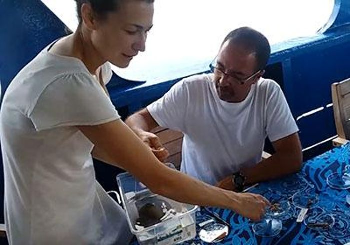Helena Safavi, left, helps her colleague, José Rosado from Maputo, Mozambique, sort cone snails collected by scuba divers near the Solomon Islands in the south Pacific. The scientists set up a mobile lab on the diving ship to dissect and preserve the biological samples. / Credit: Adam