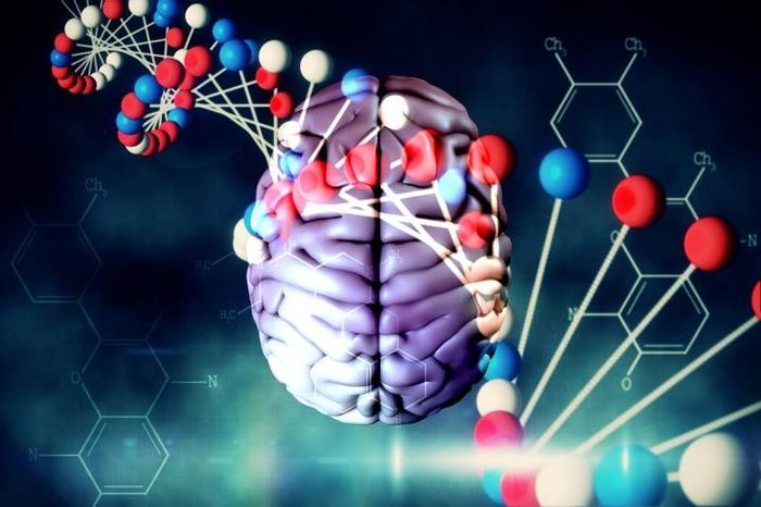 In a recent study of genes involved in brain functioning, their previously unknown features have been uncovered by bioinformaticians from the Moscow Institute of Physics and Technology and the Institute of Mathematical Problems of Biology, RAS. / Credit: MIPT Press Office