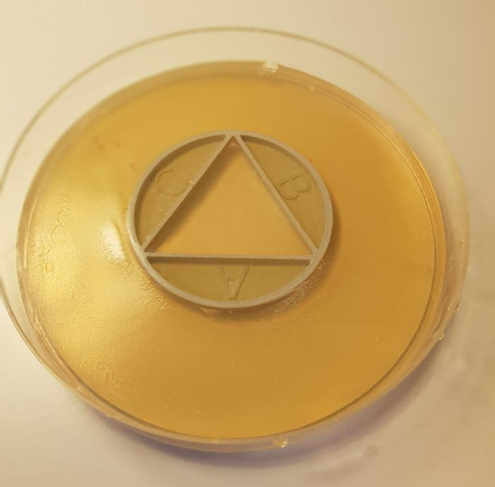 With a modified agar plate called CombiANT, high-speed tests can be performed that show how bacteria react to different combinations of antibiotics. / Credit: Nikos Fatsis-Kavalopoulos