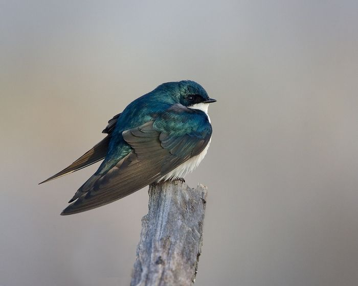 North American bird populations are in serious decline, according to a new study.