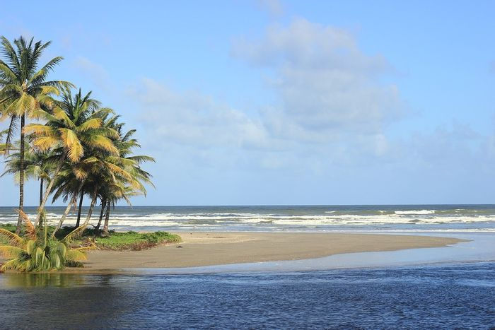 Researchers spent time in Trinidad to understand the distribution of marine sulfur in local vegetation on the island. Photo: Pixabay
