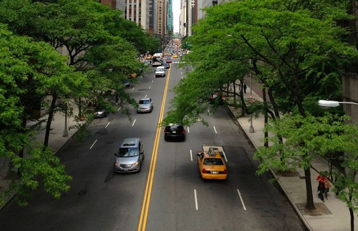 Do trees in an urban setting grow faster than those in a rural setting? A new study says yes.