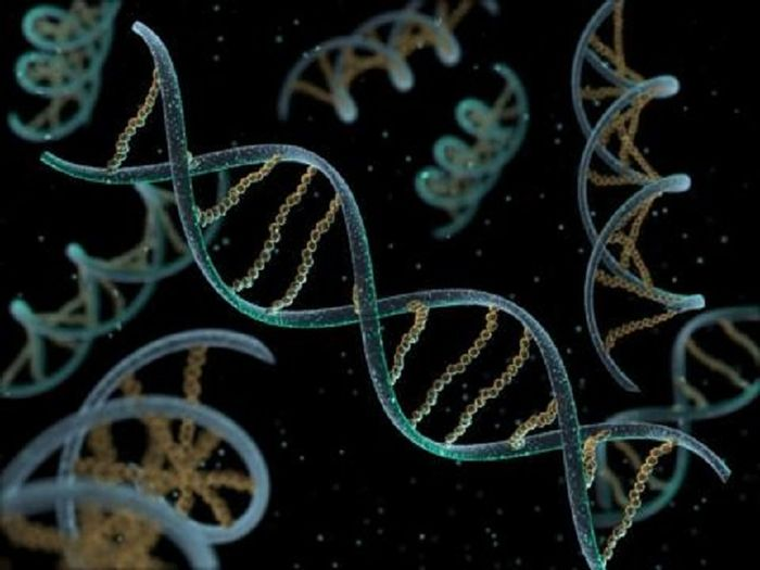 A DNA virus has DNA as its genetic material and replicates using DNA-dependent DNA polymerase. Source: Tech Times