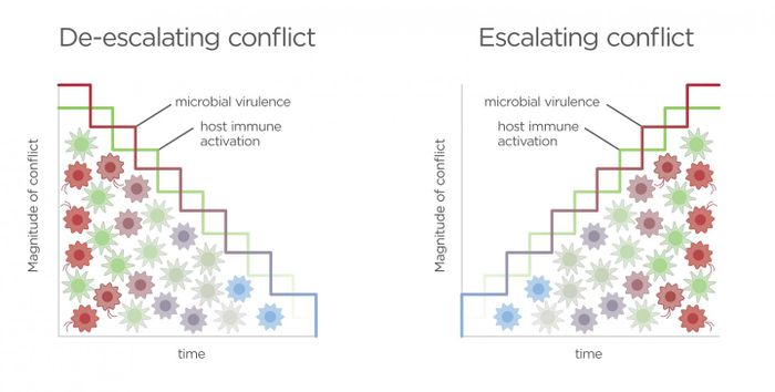 Conflict increases between host and microbiota when fueled by a competitive arms race. Immune resistance is triggered by microbial signals associated with invasion while inflammation causes increased virulent microbial gene expression. Positive feedback perpetuates an escalating conflict resulting in increasing costs and a negative outcome for both parties. Graphic by Jason Drees for the Biodesign Institute.