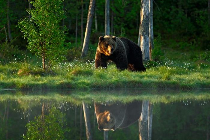 Wildlife is on the decline on a global scale, according to the WWF.