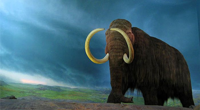 The wolly mammoth could be brought back from extinction with science, but should we?