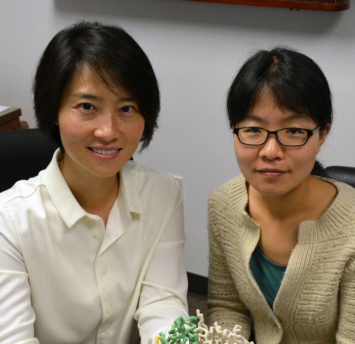 The Scripps Research Institute Professor Xiang-Lei Yang (left) and Research Associate Zhongying Mo were key authors of the new study. (TSRI)