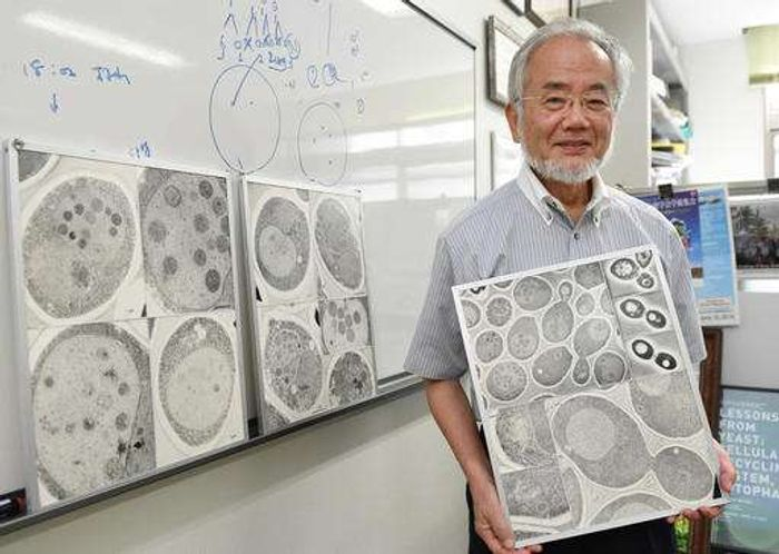 """n this July, 2016 photo, Japanese scientist Yoshinori Ohsumi smiles at the Tokyo Institute of Technology campus in Yokohama, south of Tokyo. Ohsumi was awarded this year's Nobel Prize in medicine on Monday, Oct. 3, for discoveries related to the degrading and recycling of cellular components. The Karolinska Institute honored Ohsumi for """"brilliant experiments"""" in the 1990s on autophagy, the machinery with which cells recycle their content. Disrupted autophagy has been linked to various diseases. /Credit: Akiko Matsushita/Kyodo News via AP"""