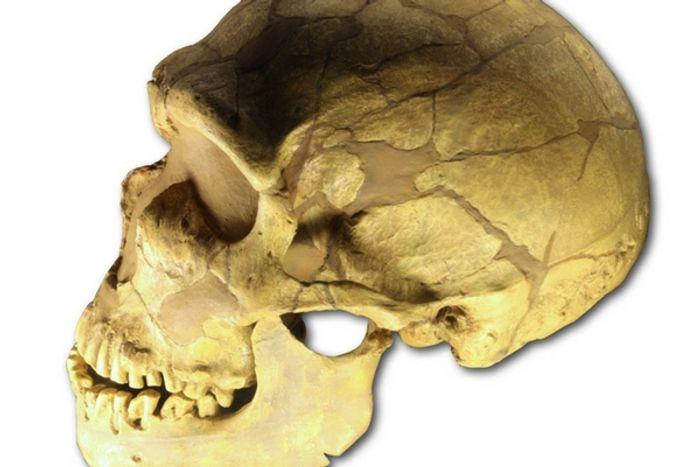 Bigger brains needed more blood flow