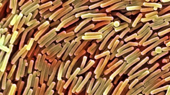 Probiotics may be able to combat C. difficile