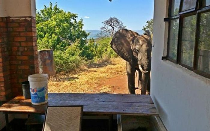 Ben the elephant is seen possibly looking for humans to help treat his wounds.