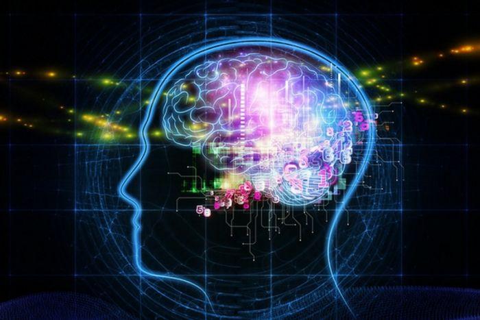 Brain structure influences how neurons grow