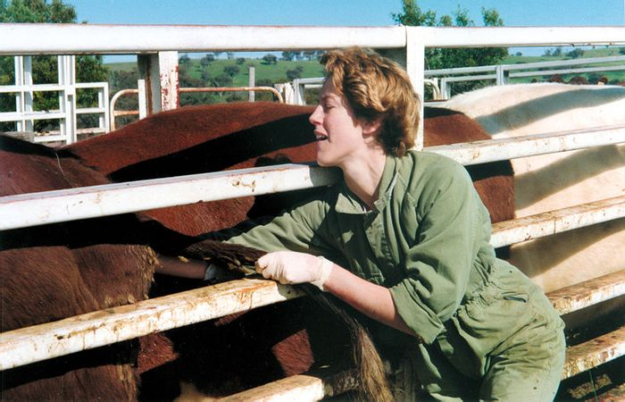 Johne's Disease is a disease of cattle caused by a bacterium which is hard to detect until clinical signs appear. It causes losses due to emaciation and death. Credit: CSIRO