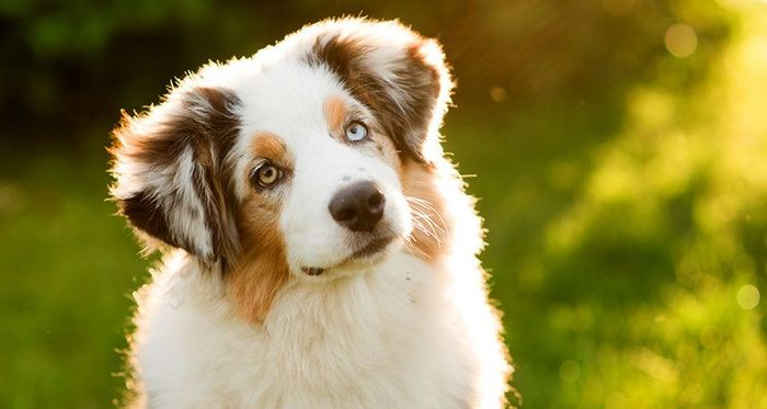 Try giving your dog some loving instead of treats, most seem to like it, study shows.