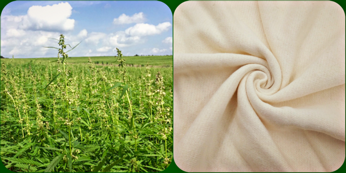 Hemp plant and fabric, credit: leafly, aliexpress