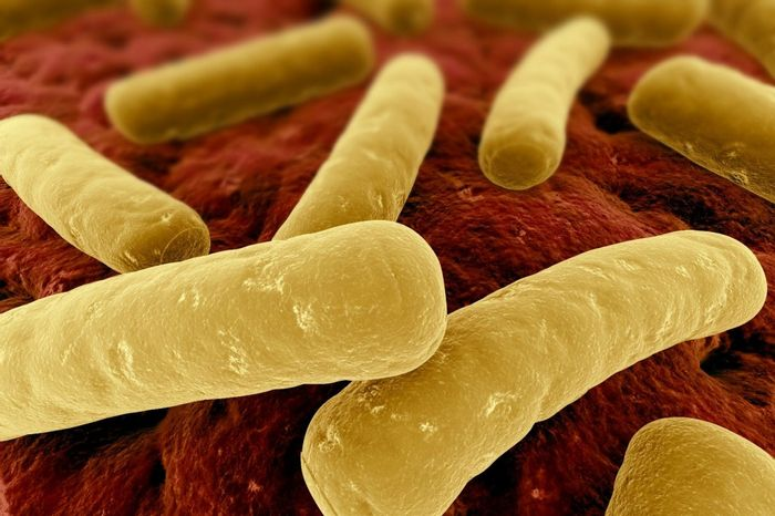 Serendipitous Discovery Points to Possible Treatment for Potentially Fatal Intestinal Infection