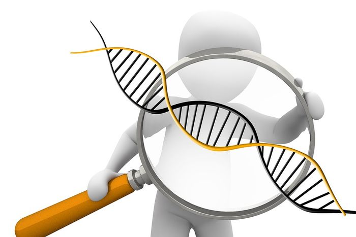Researchers have found that genetic testing will likely benefit certain populations preferentially, and have developed a tool to try to address that problem. / Image credit: Maxpizel