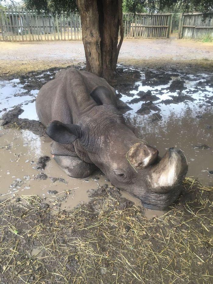 Sudan enjoys a mud bath after heavy rains impact parts of Kenya this week.