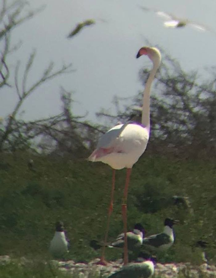Wildlife experts captured this picture of a flamingo that escaped from Kansas Zoo in 2003.