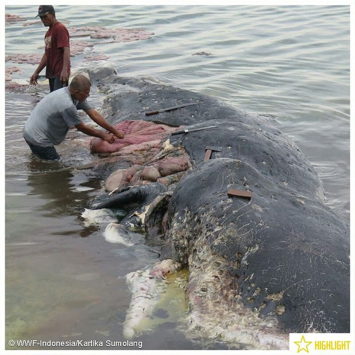 A deceased whale is investigated after being found on the shoreline of an Indonesian National Park.